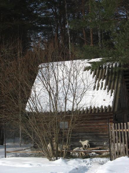 Зимний двор для коз