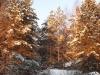 Зимовье зверей