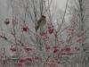 Лесной красавец -сверистель