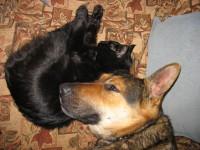 Кот Пират и собака Рысь. Идиллия.